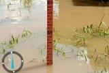 Banjir di Sembakung Kaltara berangsur surut