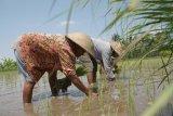Membangkitkan gairah petani muda Nusantara