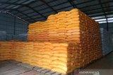 Bulog Sultra sebut stok beras di gudang capai 13 ribu ton