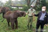 275 satwa lahir di Taman Safari Bogor meski di tengah pandemi