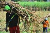 APTRI: Jangan seret nama petani untuk mengimpor gula