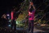 Pohon tumbang di jalan Raya menuju The Mandalika Kuta