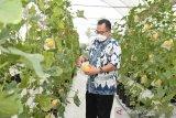 Rektor IPB University Arif Satria dorong mahasiswanya jadi petani milenial