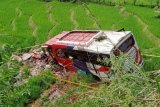 Kasus Bus Pasaman Transport Express 'nyungsep' ke sawah, sopirnya ditahan polisi