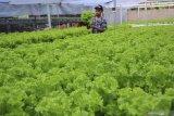 Bogor akan cetak 150 petani milenial