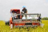 Kabupaten OKI siapkan 59.118 Hektare lahan dukung  program Food Estate