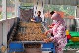 Manfaatkan ulat maggot kurangi sampah organik