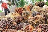 DPRD Kotim ingatkan perusahaan tidak menanam sawit di sempadan sungai
