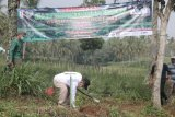 Wabup Pringsewu tanam pohon peringati hari lingkungan hidup sedunia