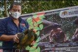 Hari lingkungan hidup sedunia, BB KSDA Riau lepasliar 33 satwa dilindungi