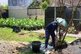 PKB Sumsel ajak pemuda lakukan reboisasi  atasi kerusakan hutan