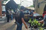 Polisi gerebek kebun ganja hidroponik di Jakarta Barat
