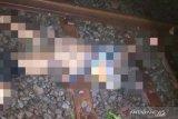 Dua lansia di Cianjur tewas tersambar kereta api Siliwangi