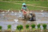 Petani di Pekalongan diimbau lakukan pompanisasi antisipasi gagal panen