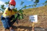 CPM tanam pohon  di lokasi eks tambang emas