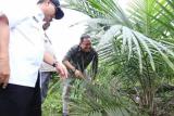 Pemkab Musi Banyuasin usulkan perbaikan jalan  akses petani sawit