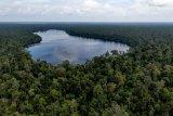 RER Perbaiki hutan rawa gambut utuh terbesar di Sumatera
