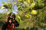 Pemkab Pessel dukung petani mulai beralih pada tanaman organik
