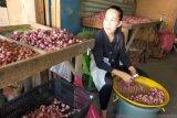 Harga bawang merah di Nunukan turun signifikan