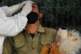 Kasus COVID-19 di Indonesia bertambah sampai 9.868