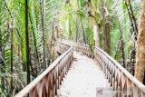 Bupati Bulungan dorong sinergitas kembangkan desa wisata mangrove