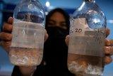 Bea Cukai gagalkan penyelundupan 121.942 ekor benih lobster ke Sumsel