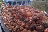 Harga kelapa sawit di Mesuji Lampung naik