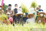 Kampar target tanam padi seluas 6 ribu hektare