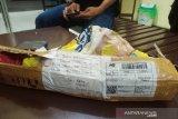 Seorang pria di Mura ditangkap dengan barang bukti satu kilogram ganja