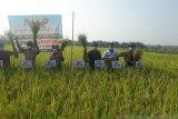 Realisasi produksi padi Gunung Kidul capai 281.284 ton GKG