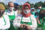 Produksi kopi Bogor lewati target