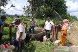 Tingkatkan produksi padi, Pemkab Barut  perbaiki jaringan irigasi persawahan