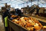 Pekerja melakukan aktivitas di pabrik pengolah porang PT Asia Prima Konjac di Desa Kuwu, Balerejo, Kabupaten Madiun, Jawa Timur, Kamis (17/6/2021). Pabrik tersebut mampu mengolah 80 hingga 200 ton umbi porang basah perhari atau 24 ribu ton hingga 60 ribu ton per tahun menjadi 12 ton keripik dan dua ton tepung porang per hari atau 3.600 ton keripik dan 600 ton tepung porang per tahun. Antara Jatim/Siswowidodo/zk