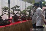 Ratusan peserta ramaikan pameran bonsai di GOR Temanggung