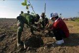 Anggota TNI AD dan jajaran Satuan Kerja Perangkat Daerah (SKPD) Pemprov Bali menanam pohon ketapang dalam giat karya bhakti penanaman pohon yang merupakan rangkaian memperingati Bulan Bung Karno III di Pantai Tangtu, Denpasar, Bali, Senin (21/6/2021). Kegiatan yang serentak digelar di kabupaten/kota se-Bali tersebut sebagai wujud kepedulian terhadap lingkungan hidup untuk melestarikan kehidupan alam semesta serta gerakan penghijuan di seluruh kawasan Pulau Dewata. ANTARA FOTO/Nyoman Hendra Wibowo/nym