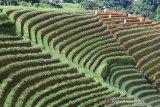 Tanaman hortikultura perlu dikembangkan di tengah pandemi