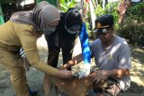 Dinas Peternakan OKU vaksin  anti rabies ratusan ekor anjing liar