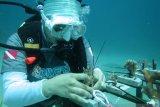 Rayakan HUT ke-75, BNI tanam ribuan terumbu karang di Likupang