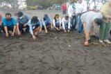 79 tukik lekang dilepasliarkan di Pantai Bugel Kulon Progo