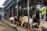 Jelang Idul Adha, harga hewan kurban di Solo merangkak naik
