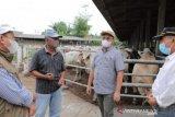 Pemprov Babel - Lampung jajaki pengembangan sapi Australia