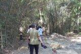 Artikel - Mengenal Goa Batu Cermin sebagai wisata penyangga Labuan Bajo