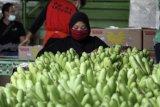 Lampung terus kembangkan komoditas hortikultura