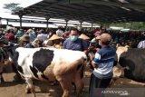 Jelang Idul Adha, harga sapi di Boyolali mulai naik