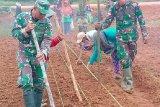 TNI membantu warga Asiki Boven Digoel bercocok tanam