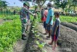 Satgas TNI Yonif 512 ajak warga di perbatasan kelola lahan pertanian