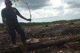 DLH Bartim akui kerusakan Sempadan Sungai Bumut akibat land clearing