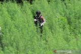 Bareskrim Polri temukan ladang ganja seluas lima hektare di Nagan Raya Aceh