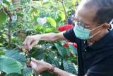 kabupaten Magetan dorong kopi Alastuwo jadi komoditas andalan