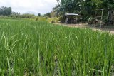 Distan mencatat alih fungsi lahan di Mataram capai 90 hektare